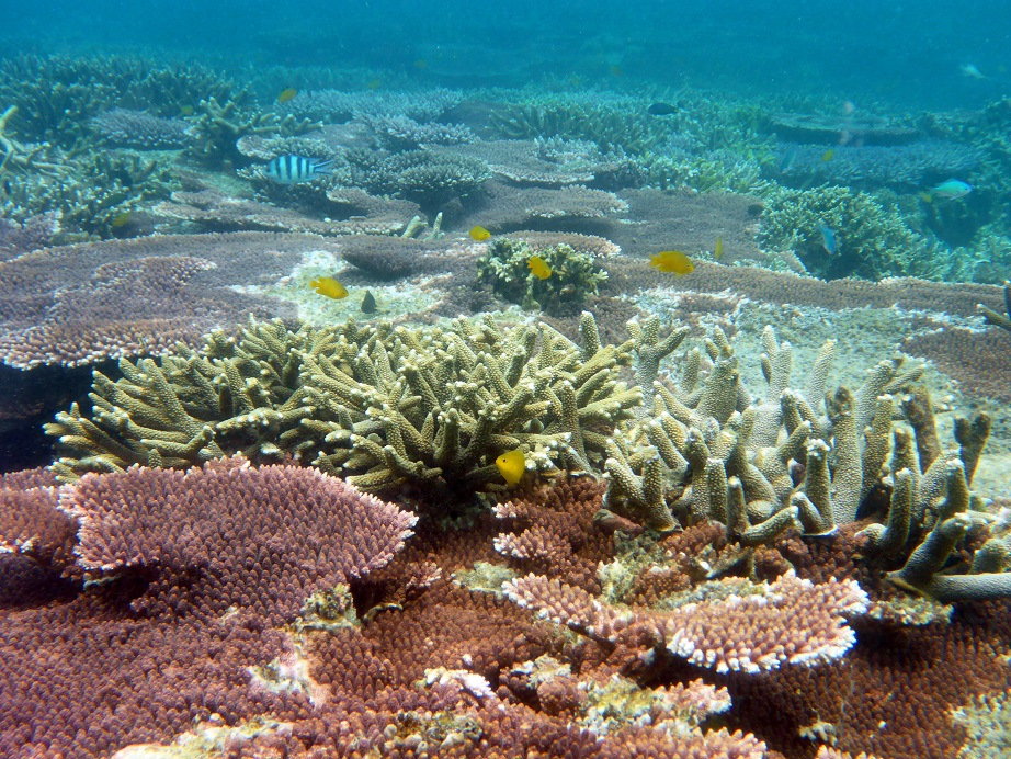 Coral Island Tioman Malaysia